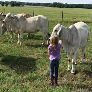G5 Ranch Georgia - Grey Brahman Cattle